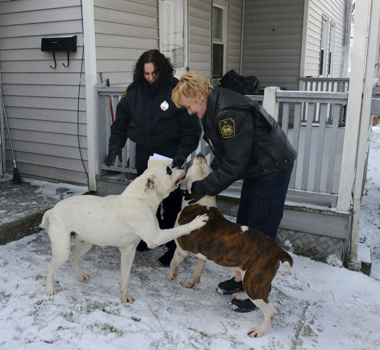 Checking on dogs Pittsburgh police officer Christine Luffey, left, and Humane Society officer Kathy Hecker play with two pit bulls while checking on dogs during the frigid days earlier this week.