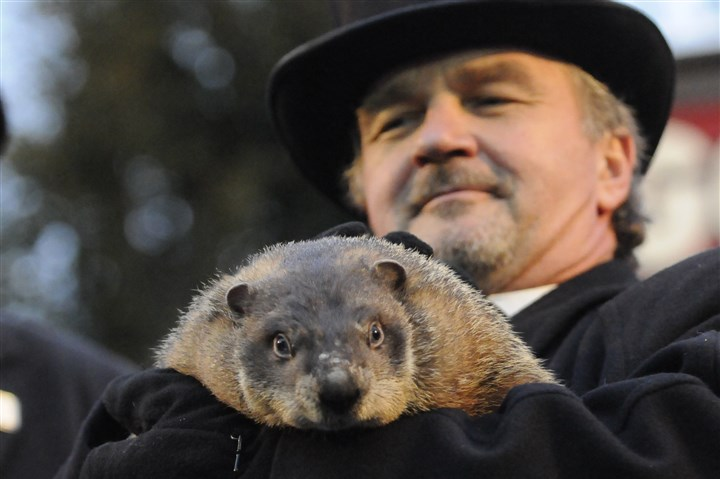 Punxsutawney Phil 1 Punxsutawney Phil and handler John Griffiths in 2009.