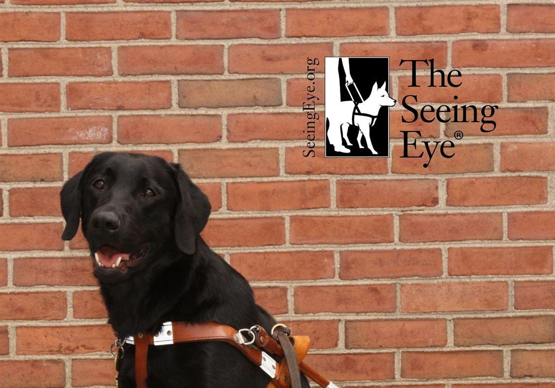 Pet Tales  Darius graduates to service as a guide dog  486afdf1b