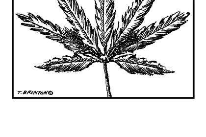 Illustration of marijuana