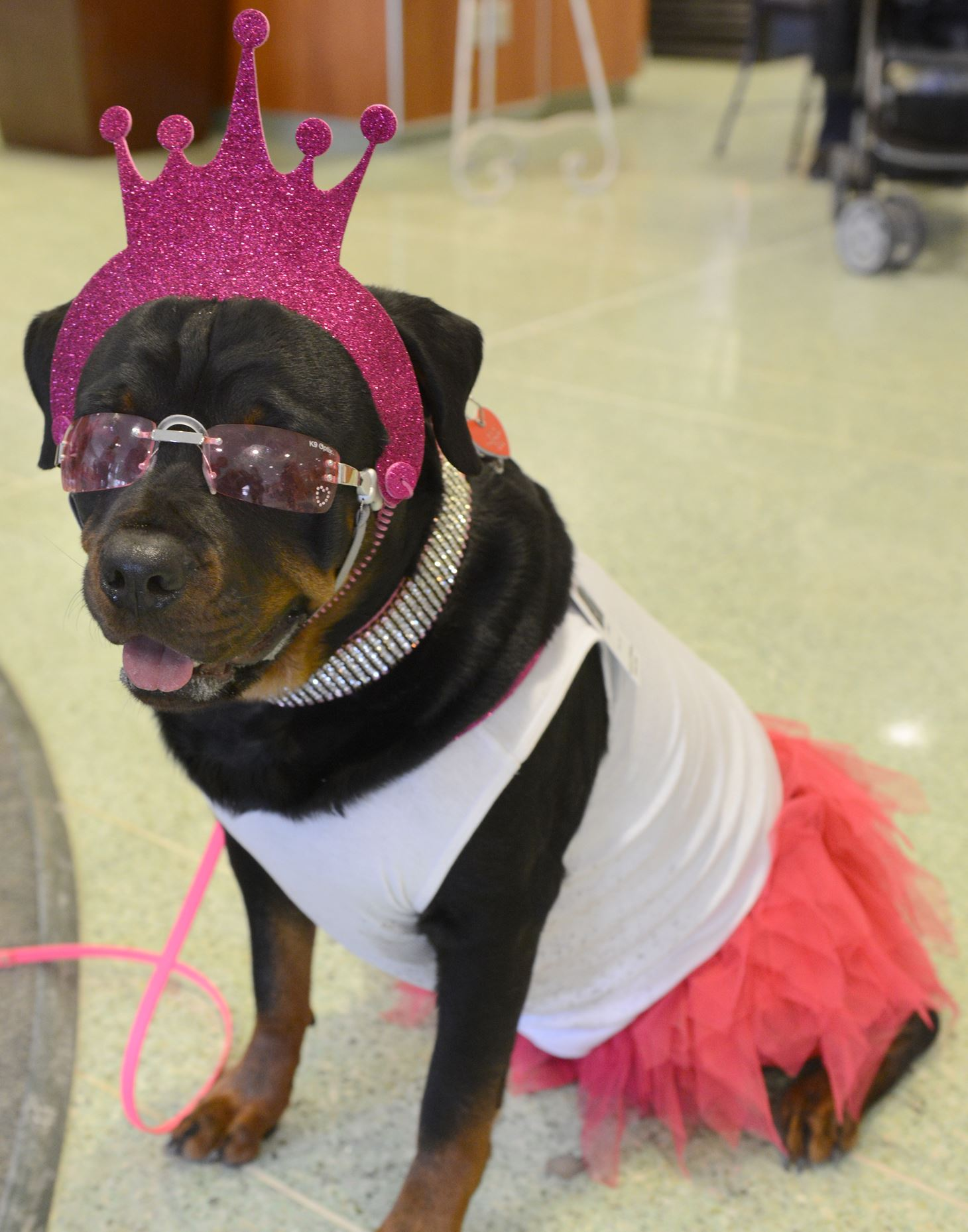 "Josie Josie wears her glasses and crown, along with a ""tutu"" at UPMC Montefiore . Josie, is a champion in the show ring and a certified therapy dog."