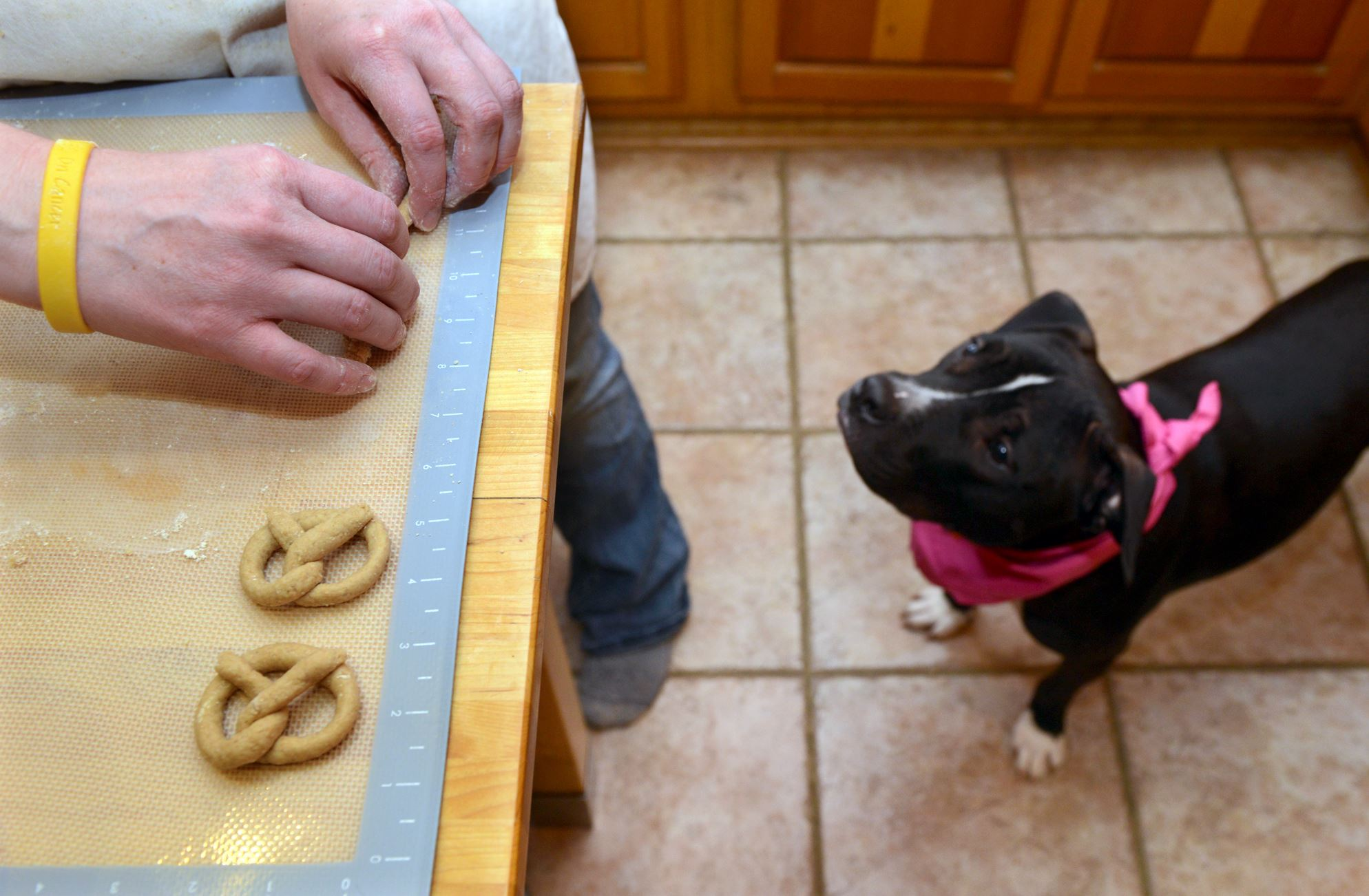 Lavery Dr. Sara Lavery makes chicken parmesan pretzel dog treats under the watchful eye of her pit bull Arya.