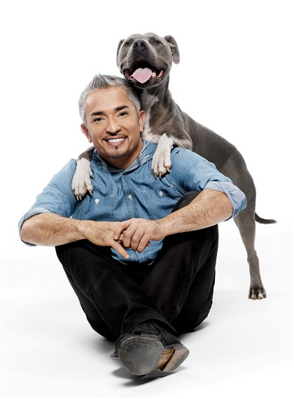 "Cesar Millan with dog Cesar Millan's new show, ""Cesar 911,"" premieres at 9 p.m. Friday on the National Geographic Channel."