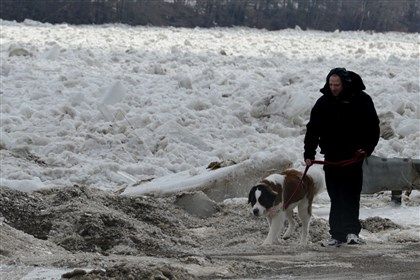 Ice jam Rob Barger of Gibsonia walks his Saint Bernard, Lacey, along Kittanning Pike in Parker, Armstrong County, The ice-jammed Allegheny River is raising fears of flooding in the area.