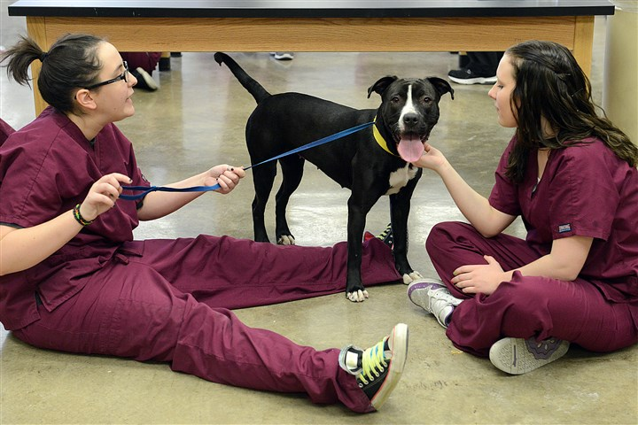 New friend Veterinary technology students Rachel Morton, left, and Stephanie Dzera get acquainted with Jolie.