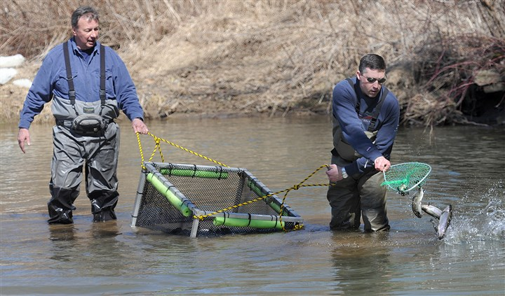 Pennsylvania Fish and Boat Commission trout stocking Would the Pennsylvania Fish and Boat Commission, which stocks streams each spring, merge with the Game Commission? Hunters and anglers are not in favor of such a change.