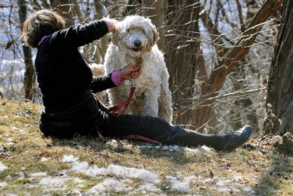 20140311lrclipstandalone01 Mrea Csorba of Edgewood clips her dog during the warm spell Tuesday in Schenley Park.
