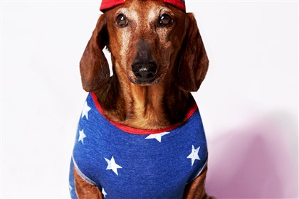 American Eagle American Eagle's almost-April Fool's joke about launching a line of dog clothes.