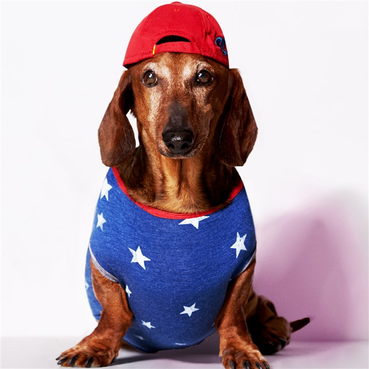 "American Eagle's 'American Beagle' A model for ""American Beagle,"" an almost-April Fool's joke from American Eagle, offering a line of stylish clothes for pooches."