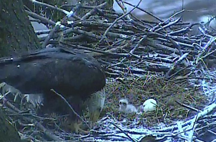 Second eagle egg The second eagle egg hatched after 7 a.m. Sunday.
