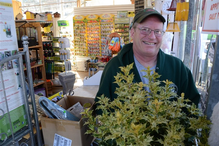 "Gardening 2 Randy Soegel of Soergel Orchards and Garden Center in Franklin Park with false holly ""Goshiki."""