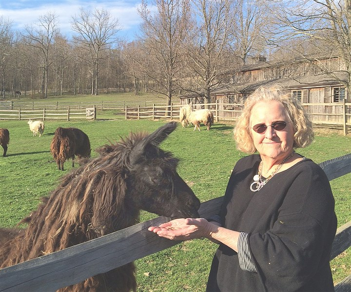20140428llama0501 Elizabeth Crumrine, incoming president of the Friends of Citizens Library visiting with Diamonds the llama at Tara Hill Farm.