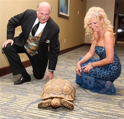 "Jungle Cruise Monongahela Valley Hospital's President and CEO Louis J. Panza Jr. with his wife Cheryl Panza, meet ""Frank the Tank,"" a 14-year old Sulcata turtle, one of the wild visitors at the hospital's ""Jungle Cruise"" gala."