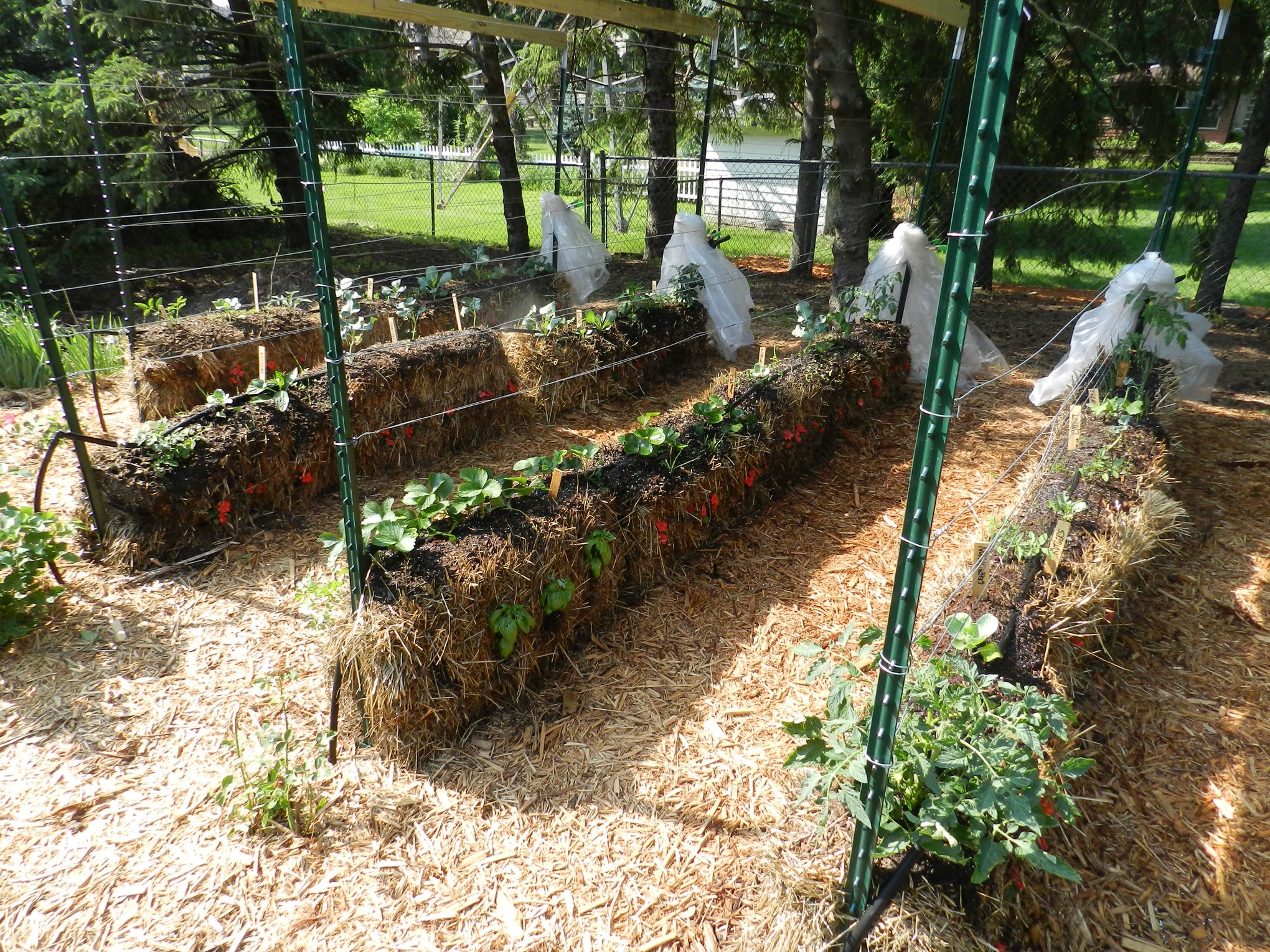 joel karsten 39 s tips will help you become a straw bale gardener pittsburgh post gazette