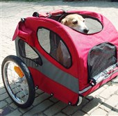 Hammy prepares for his first test ride in the Solvit HoundAbout II Bicycle Trailer in Washington.