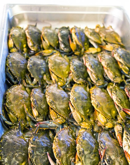 20140611hoseaharvest5530 Soft shell crabs packed and ready for shipping.
