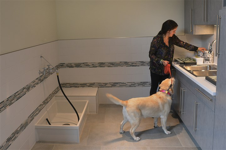 "dog wash station in the inner lounge Sara Perelman of Walnut Capital gives Barkley, a six-year-old yellow Labrador retriever, a treat at the dog wash station in the ""inner lounge."""