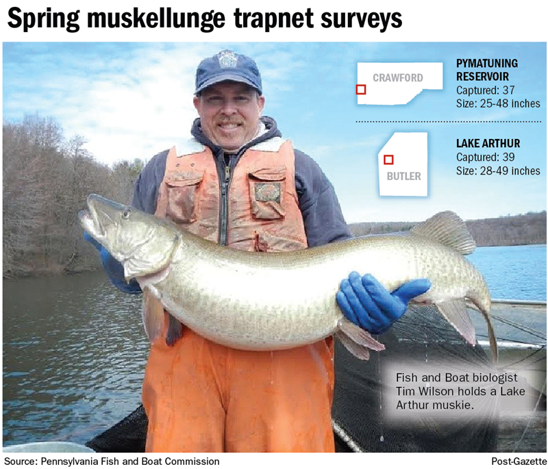 Survey suggests successful fish administration at lake for Pa boat and fish commission