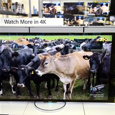 Sony 4k Ultra HD television  The Sony 4k Ultra HD television on display inside the Best Buy in Robinson. Analysts believe consumers should research new technology before purchasing it.