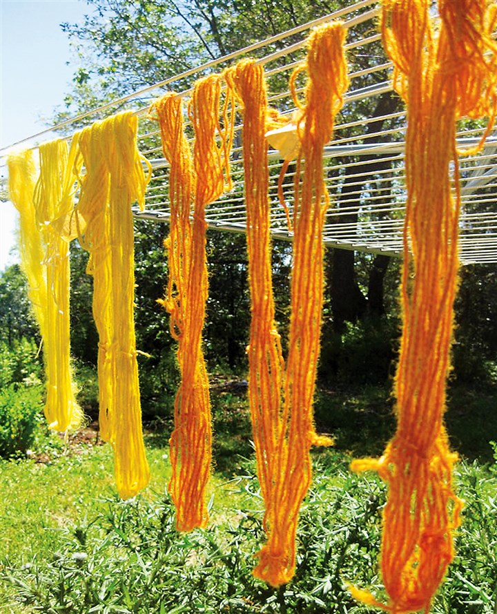 Yarn dyed using onions and marigolds. Yarn dyed using onions and marigolds.