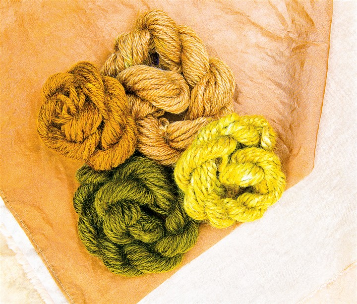 Skeins of yarn dyed using onions. Skeins of yarn dyed using onions.