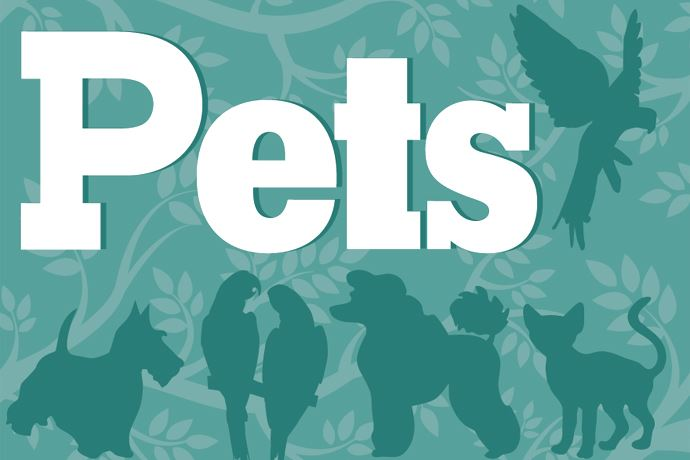 Pets Section Web Logo 690 by 460