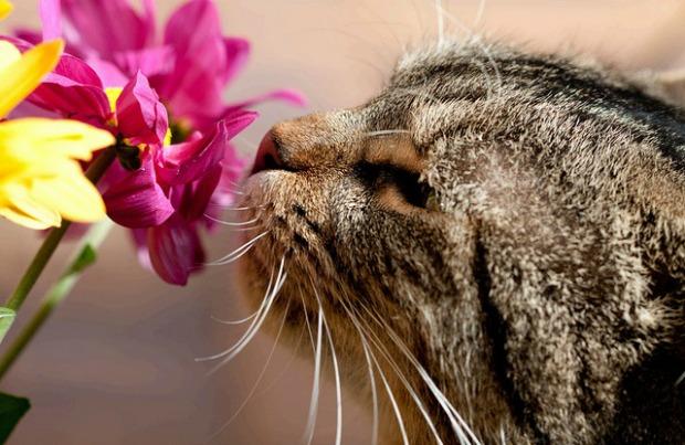 cat_flower.jpg