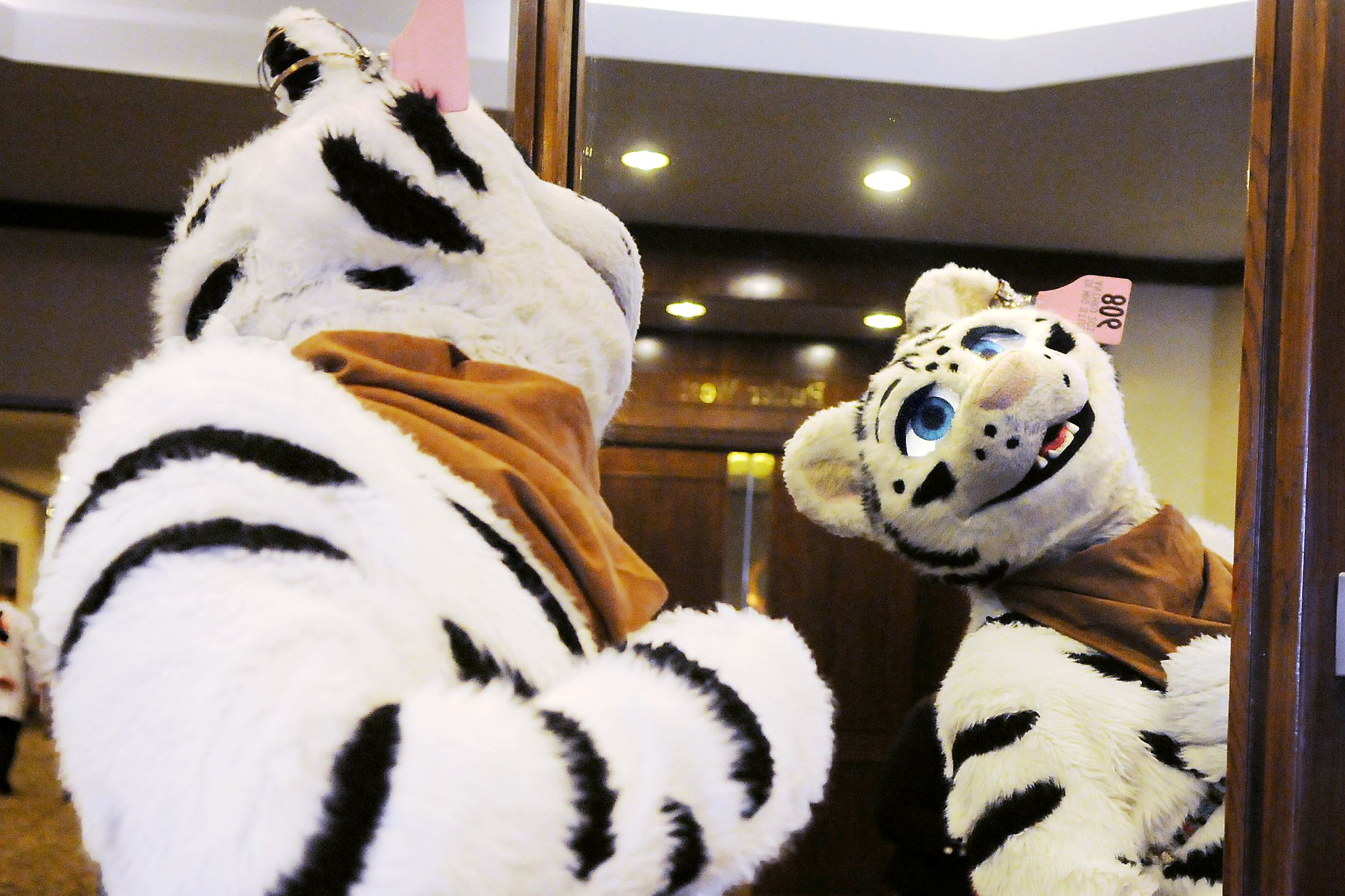 Furry Nation Anthrocon Convention Unleashed On Downtown