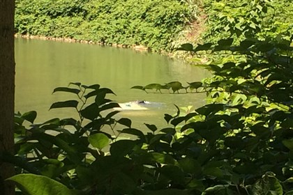 20140705kdka_car_creek.jpg A body was found in a vehicle submerged in Chartiers Creek in McKees Rocks.