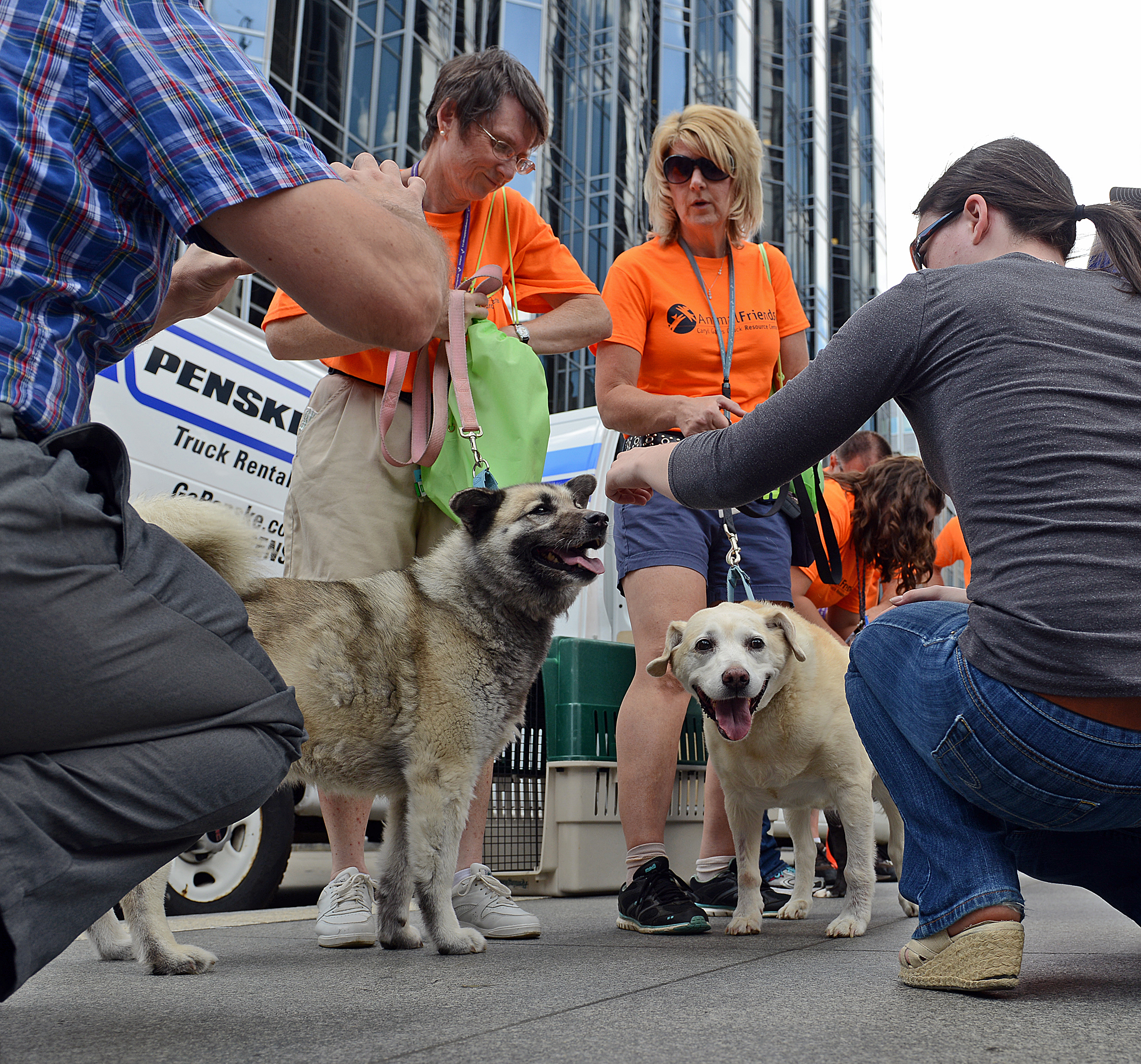 "Tessa, a Norwegian Elkhound, and Ruby Dee, a yellow labrador Tessa, a Norwegian Elkhound, left, and Ruby Dee, a yellow labrador, revel in the attention from the lunchtime crowd Wednesday at PPG Place as part of ""Mutt Mob."""