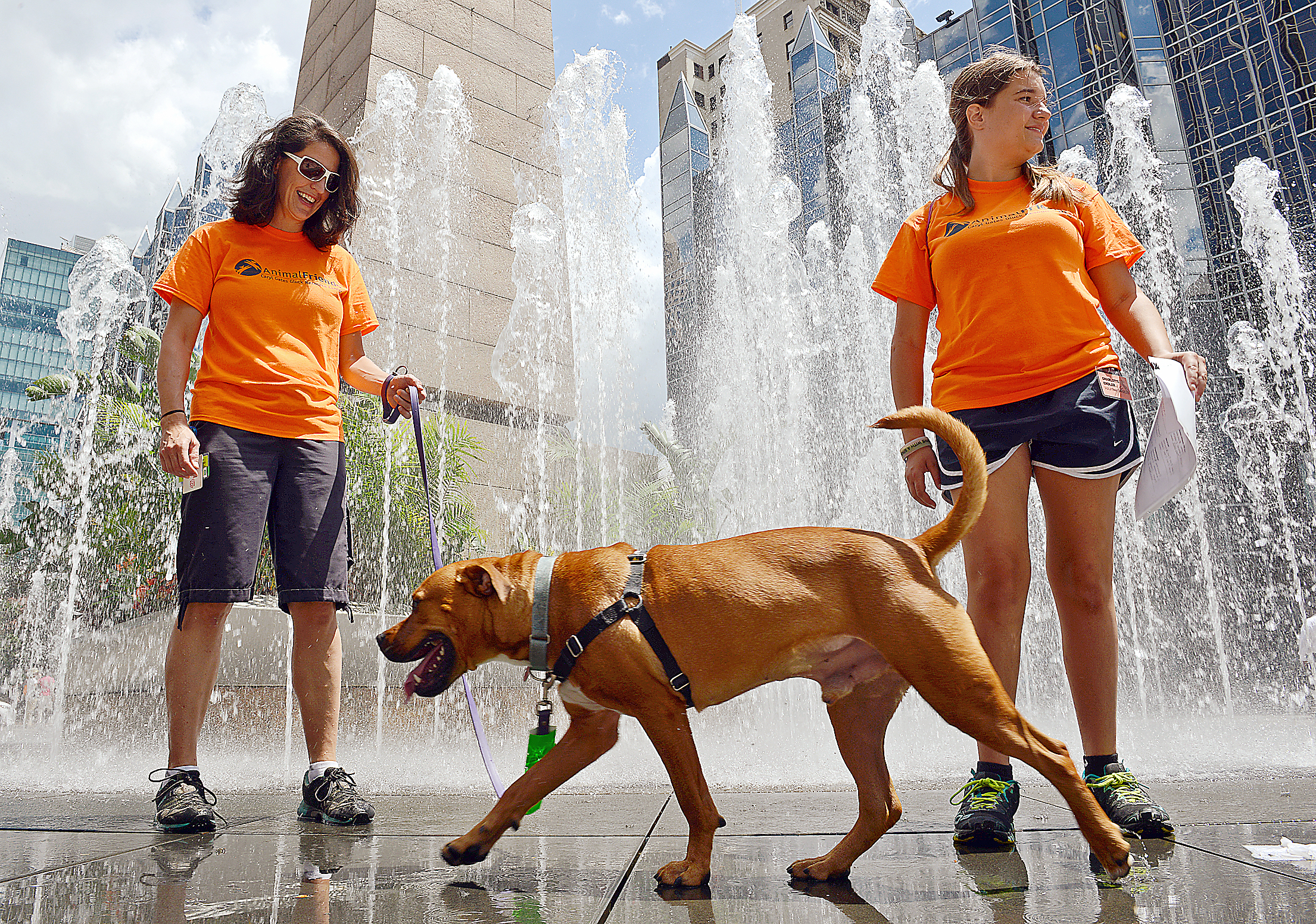 Holly Gumbeski, left, and Charlotte Ender, both of Animal Friends, along with Monceler, a two-year-old pit bull mix, enjoy the cooling spray of the dancing fountain at PPG Place Wednesday.