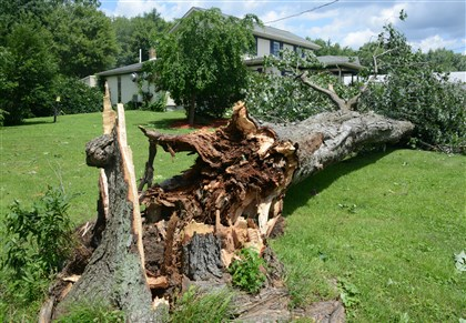 large tree in front of the Yellow Creek Inn The winds from a tornado that went through Jackson Center brought down a large tree in front of the Yellow Creek Inn.