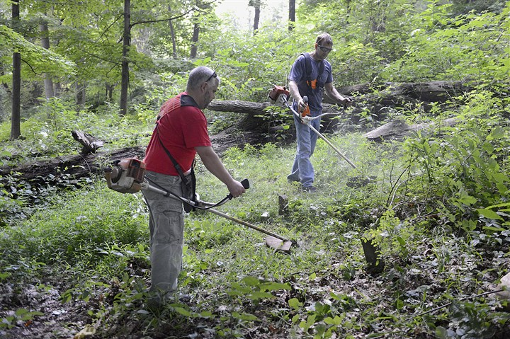 Dixmont cleanup 1 Maintenance crew workers Kirk Langham, left, and Donald Yahnert cut underbrush at the overgrown cemetery at the former Dixmont State Hospital in Kilbuck today.