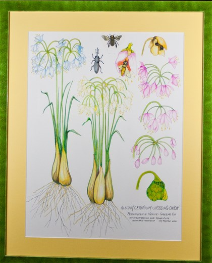 "20140725hdOnionMag-2 ""Nodding Onion"" by Bill Paxton is part of his show ""Bigger Than Life"" at the Phipps Garden Center."