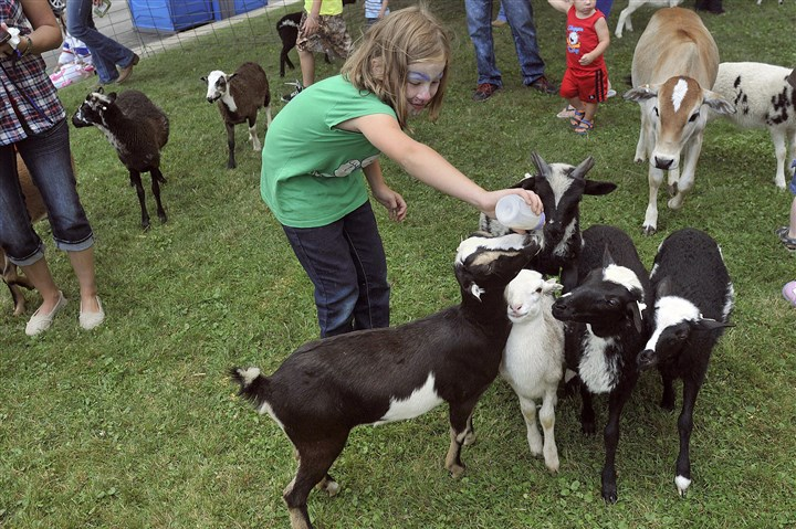 20140729lrraindaylocal09-8 Abbigail Davis, 9, of Brave, Pa., feeds the baby goats in the petting zoo.