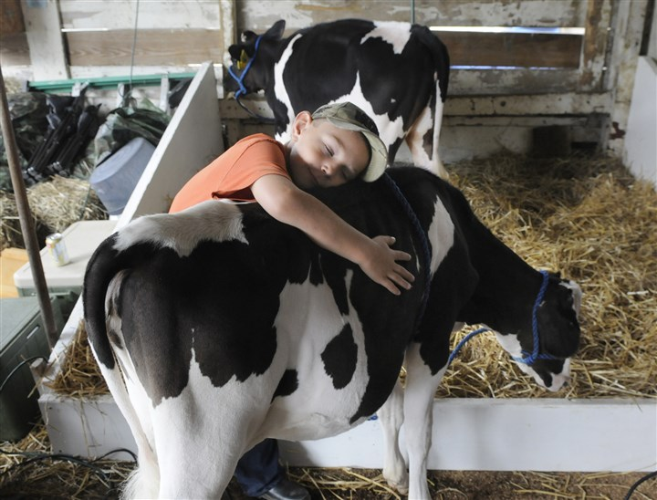 2013RRcountyfairmag T.J. Frye, 7, hugs his calf, Old Betsy, while getting ready to show her at last year's Westmoreland Fair. This year's addition takes place Aug. 15-23.
