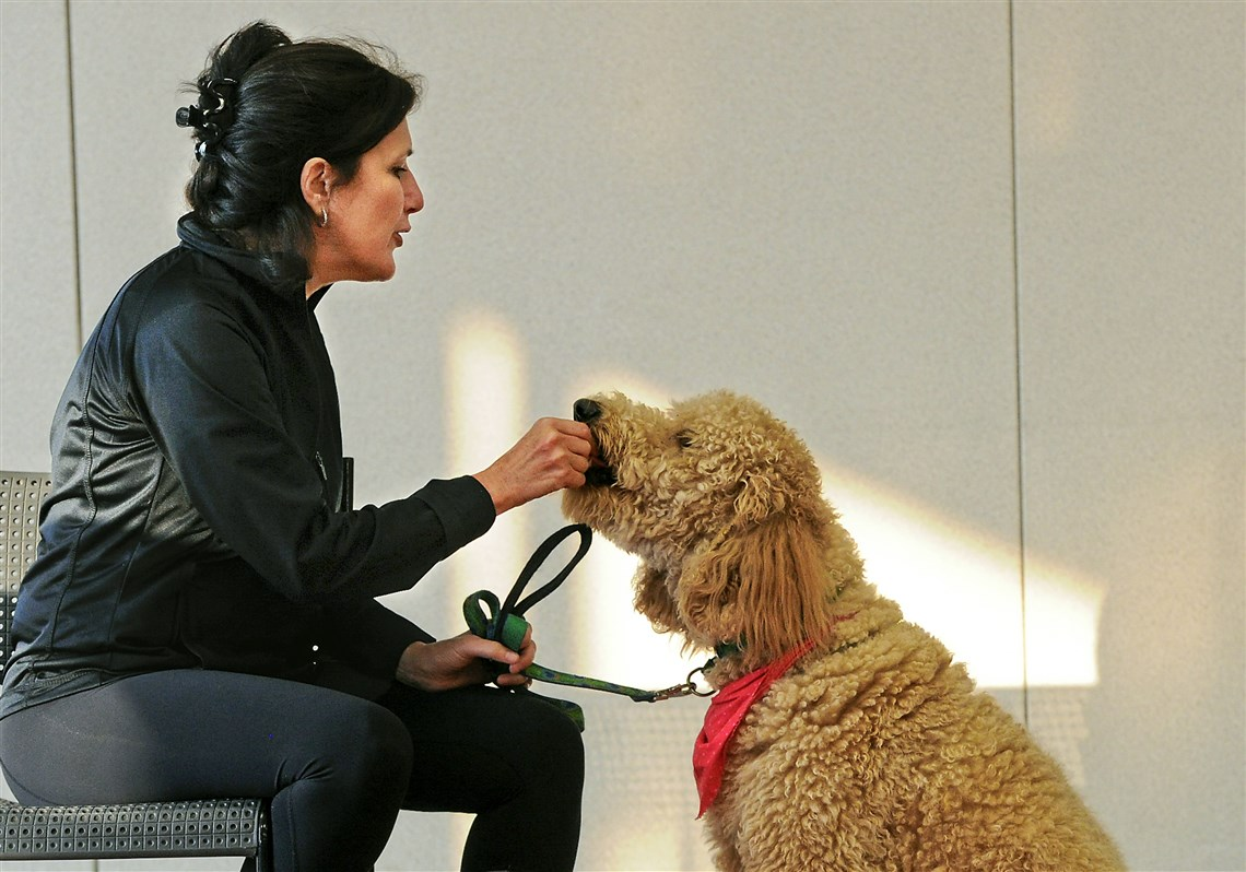 Therapy dogs undergo rigorous classes testing to do their job liz sullivan left gives maggi a treat during obedience drills at the wpa humane 7 therapy dogs 1betcityfo Image collections