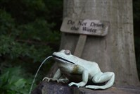 The Frog Hollow is located in the Enchanted Woods at Winterthur in Delaware.