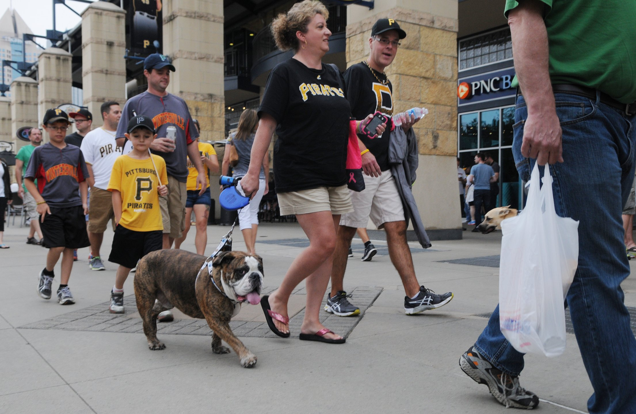 Heather Pencak, left, and her husband, Joe, of New Kensington walk their English bulldog, Champski, toward the gate at PNC Park Tuesday. The Pencaks and Champski were among the many pet owners and pets who visited Pup Night at PNC Park Tuesday.