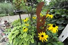 Black-eyed Susans decorated the backyard of Eric D'Ambrogi's garden, last year's winner in small garden category of the Great Gardens Contest.