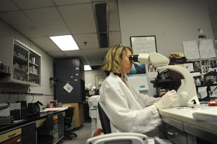 8b600k75 Anita K. Kozy performs a microscopic examination of a biological sample in the Allegheny County Crime Lab.