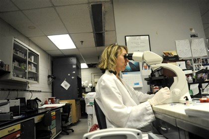 Allegheny County Crime Lab. Criminalist Anita K. Kozy performs a microscopic examination of a biological sample in the Allegheny County Crime Lab.
