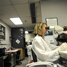 Anita K. Kozy performs a microscopic examination Anita K. Kozy performs a microscopic examination of a biological sample in 2009 in the Allegheny County Crime Lab. A lack of funds might force the county to close the facility.