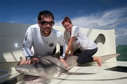 David Shiffman works to control a lemon shark in the Florida Everglades prior to tagging and measuring. Because of his savvy knowledge of sharks, the biologist and Mt. Lebanon High grad has gained a large following on Twitter.