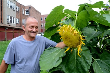 20140805dohomeslight4-3 Tim Prodanovich, a resident at the Light of Life Rescue Mission on the North Side, shows off some of the sunflowers he grows in a garden next to the shelter.