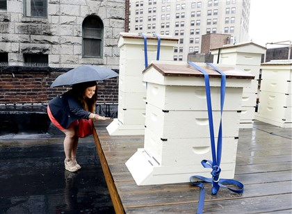 20140812bwBeesSeen07-6 Christine Musial watches the bees enter and leave on the roof apiary at the Duquesne Club.