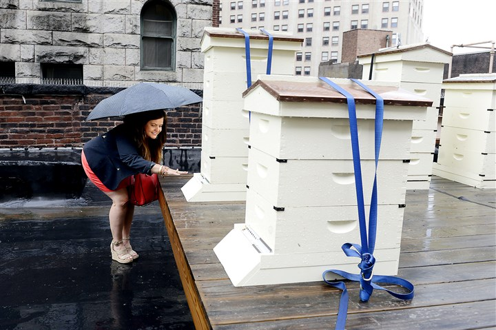 Duquesne Club bees Christine Musial watches the bees enter and leave the roof apiary of the Duquesne Club.