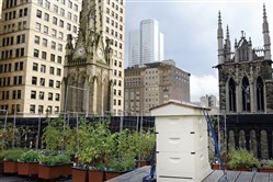One of the hives atop the Duquesne Club, Downtown.