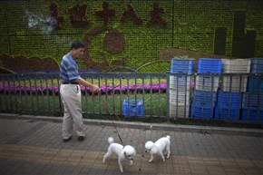 "A man scolds his dogs near a flower wall showing Chinese characters that read: ""Welcome the 18th National Communist Party Congress"" in Beijing in 2012."