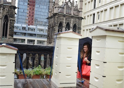 20140814jrBeesMag7-6 Christine Musial with VisitPittsburgh gets a closer look at the beehives on the roof of the Duquesne Club, Downtown.